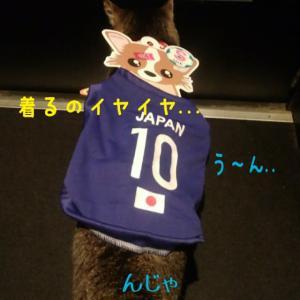 仙台東口イリス2019.11/14 にゃんこBAR