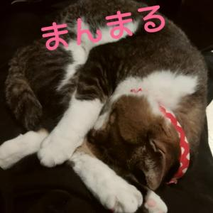 仙台東口イリス2019.11/17 にゃんこBAR