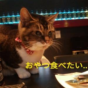 仙台東口イリス2019.11/19 にゃんこBAR