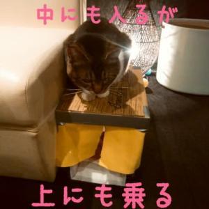 仙台東口イリス2019.12/6 にゃんこBAR