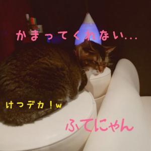 仙台東口イリス2019.12/8 にゃんこBAR