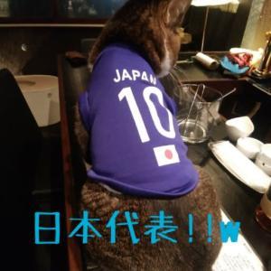 仙台東口イリス2019.12/10 にゃんこBAR