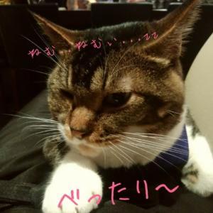 仙台東口イリス2019.12/11 にゃんこBAR