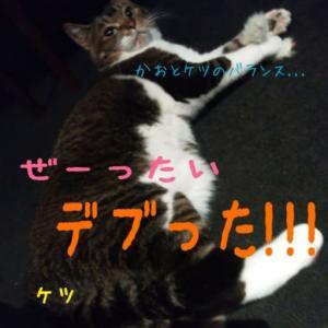 仙台東口イリス2019.12/12 にゃんこBAR