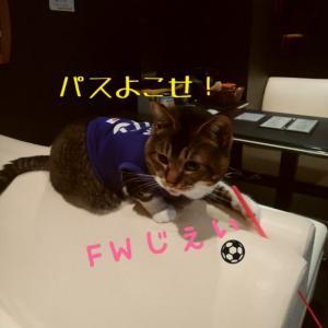 仙台東口イリス2019.12/13 にゃんこBAR