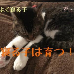 仙台東口イリス2020.1/24 にゃんこBAR