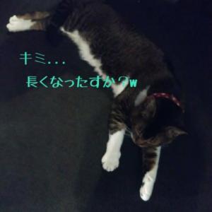 仙台東口イリス2020.1/28 にゃんこBAR