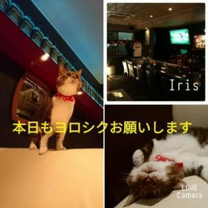 仙台東口イリス2020.1/29 にゃんこBAR
