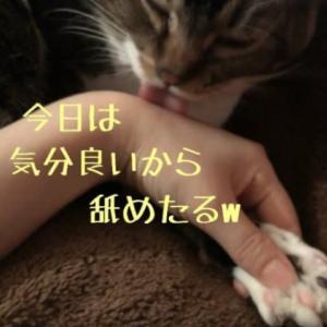 仙台東口イリス2020.2/18 にゃんこBAR