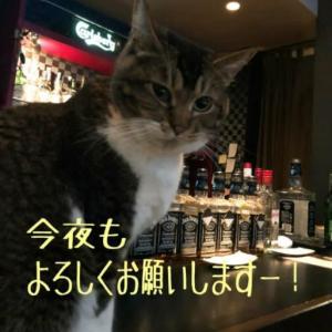 仙台東口イリス2020.2/19 にゃんこBAR