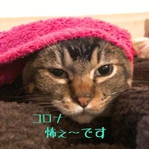 仙台東口イリス2020.4/4 にゃんこBAR