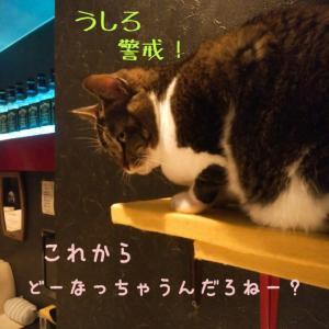 仙台東口イリス2002.4/8 にゃんこBAR