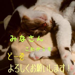 仙台東口イリス2020.5/25 にゃんこBAR