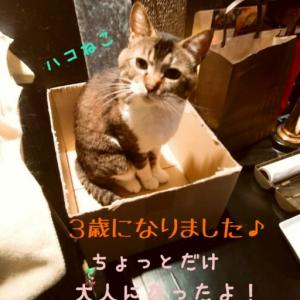 仙台東口イリス2020.6/1 にゃんこBAR