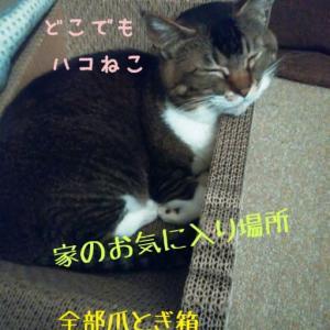仙台東口イリス2020.6/13 にゃんこBAR