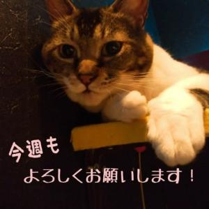 仙台東口イリス2020.6/18 にゃんこBAR
