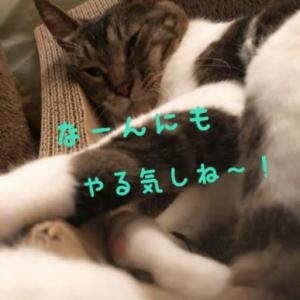 仙台東口イリス2020.6/22 にゃんこBAR