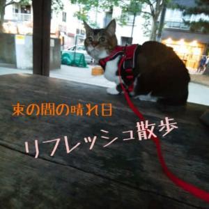 仙台東口イリス2020.6/26 にゃんこBAR