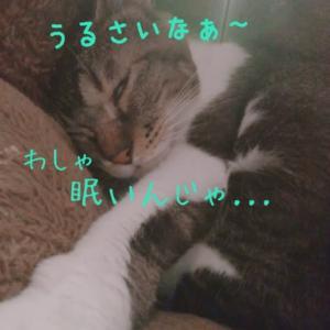 仙台東口イリス2020.6/29 にゃんこBAR