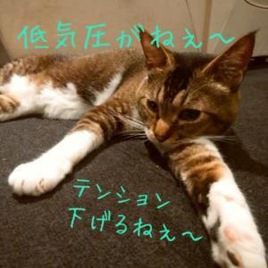 仙台東口イリス20207/10 にゃんこBAR