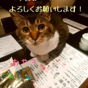 仙台東口イリス2020.7/22 にゃんこBAR
