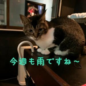 仙台東口イリス2020.7/27 にゃんこBAR