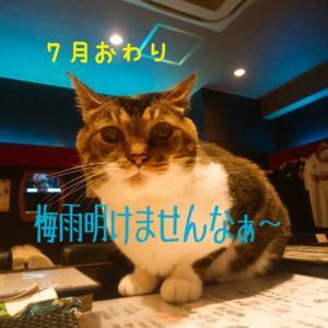 仙台東口イリス2020.7/31 にゃんこBAR