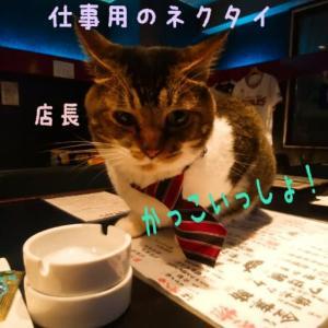 仙台東口イリス2020.8/7 にゃんこBAR