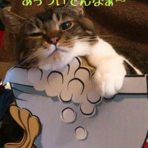仙台東口イリス2020.8/10 にゃんこBAR