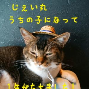 仙台東口イリス2020.8/14 にゃんこBAR