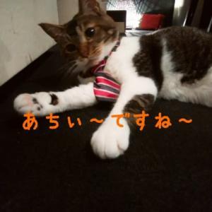 仙台東口イリス2020.8/17 にゃんこBAR