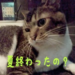 仙台東口イリス2020.8/31 にゃんこBAR
