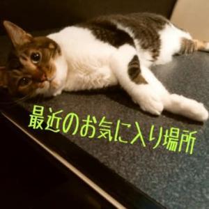 仙台東口イリス2020.9/4 にゃんこBAR