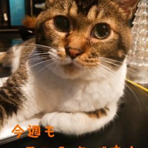 仙台東口イリス2020.9/14 にゃんこBAR