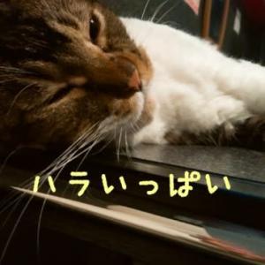 仙台東口イリス2020.10/5 にゃんこBAR