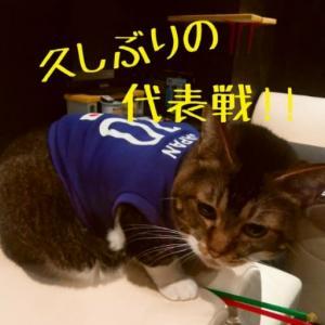 仙台東口イリス2020.10/9 にゃんこBAR