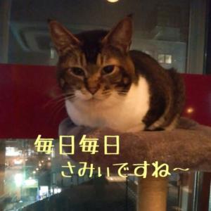 仙台東口イリスにゃんこBAR2020.12/17