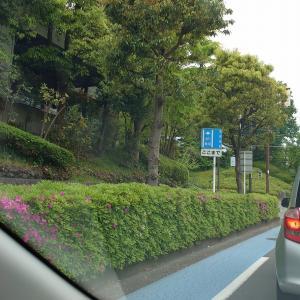 都会の横浜でひとり暮らし始めた息子のところに救命!! 常備菜送りました。