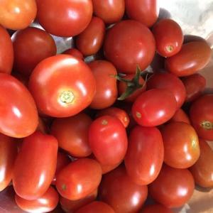 トマトが‥‥