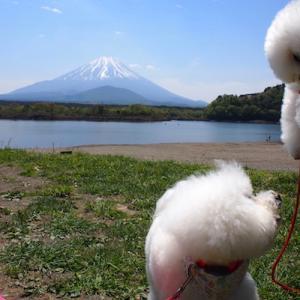 モフモフ山中湖、はるとの時間。