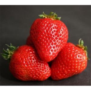 イチゴは見た目で選ぶ