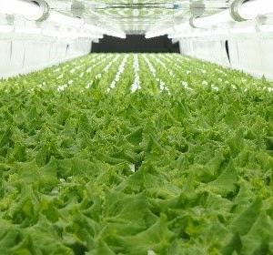 ファミマ植物工場