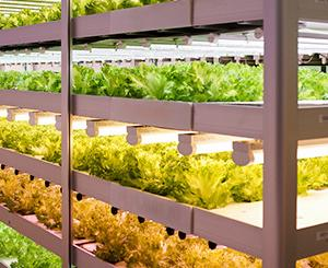 植物工場と病害虫対策