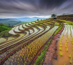 世界の棚田と農業遺産と増産