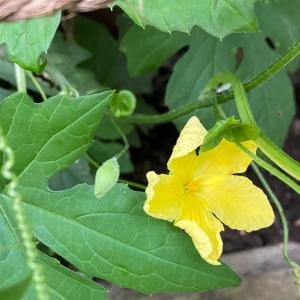 黄色いお花が咲きました〜ヾ(*´∀`*)ノ