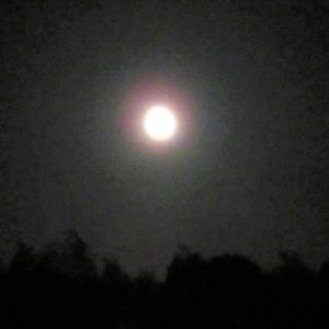 「嵐の前の名月を」