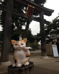 招き猫、奥武蔵グリーンラインマラソンを走る!