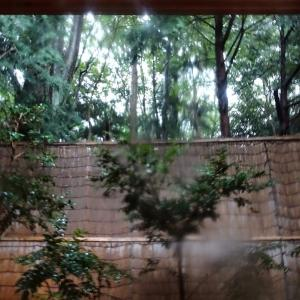 森のしずく 施設編 (2019年9月)