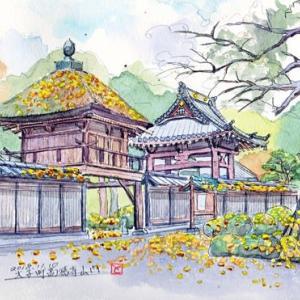 高徳寺の銀杏(2018/11/09)