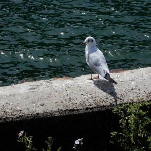 舘山寺から奥浜名湖へ